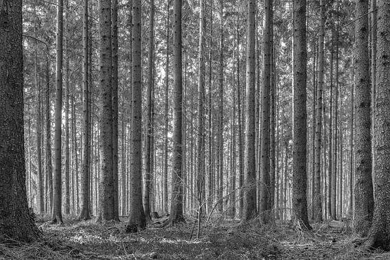 forest van Heinz Grates