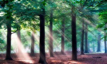 Zonnestralen in het bos. sur Teun IJff