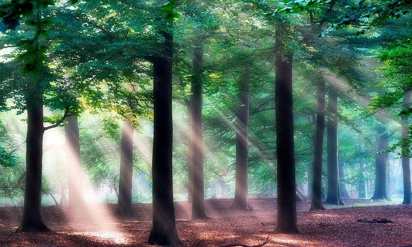 Zonnestralen in het bos. van Teun IJff