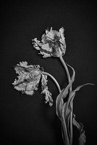 Paire de tulipes enchevêtrées sur Karel Ham