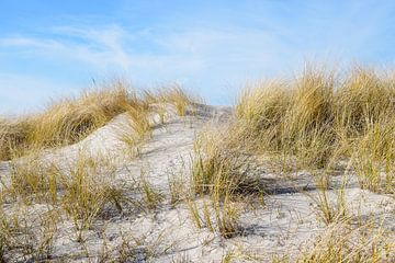 zandduin met droog helmgras (Ammophila arenaria) op een zonnige dag tegen een blauwe hemel op het st van Maren Winter