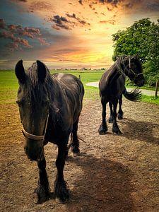 Deux chevaux frisons sur Digital Art Nederland