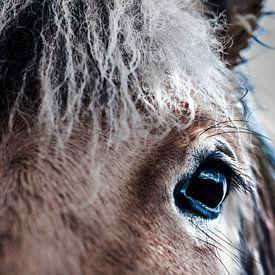 oog van een paard fotoposter of  wanddecoratie van Edwin Hunter