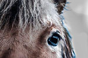 oog van een paard fotoposter of  wanddecoratie
