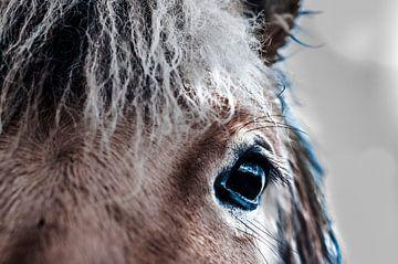 Auge eines Pferdefotoposters oder einer Wanddekoration von Edwin Hunter