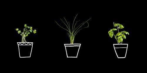 Kruiden in pot, herbs in pot.
