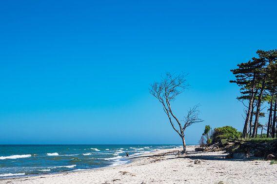 Trees on the Baltic Sea coast