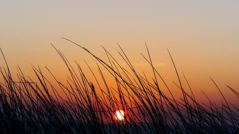 De zonsondergang boven zee gezien door het helmgras bovenop het duin van Alex Hamstra