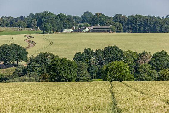 Graanvelden rond de gemeente Simpelveld