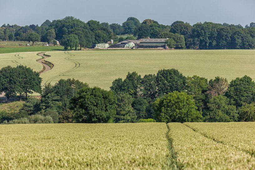 Graanvelden rond de gemeente Simpelveld van John Kreukniet