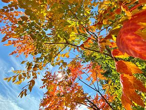 Bunte Herbstblätter von Markus Jerko