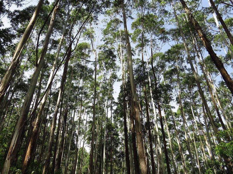Hoge bomen van Niels Eric Fotografie