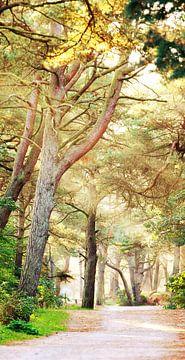 Waldweg von Jana Behr