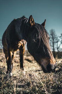 Porträt eines Pferdes von Colin van Wijk
