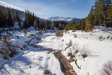 Rasciesa in de sneeuw von Yvs Doh
