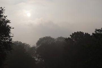 Sonnenaufgang über den Bäumen. von Jessica Bakhuijs