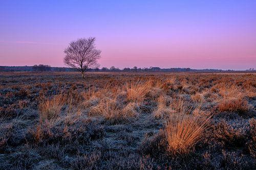 Ginkelse Heide van