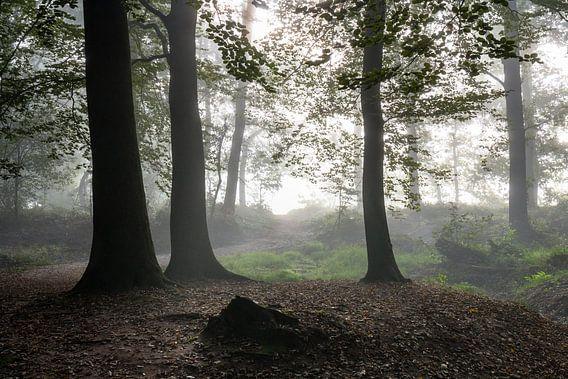 Blinding Fog van William Mevissen