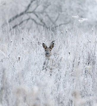 Ree tussen de bevroren struiken op de vroege ochtend von Jo Pixel