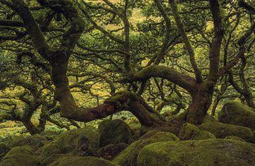 Forêt de chênes sur Joris Pannemans - Loris Photography