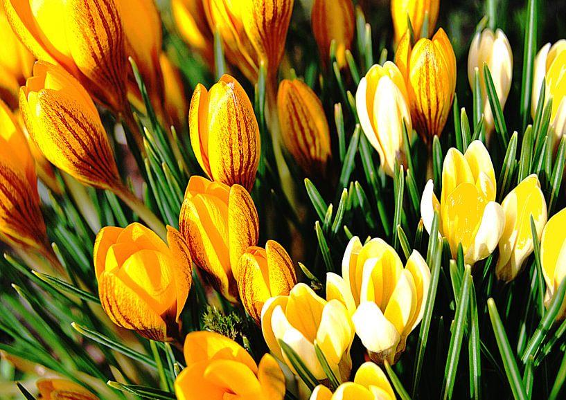 Spring sur Tineke Visscher