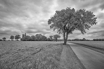 Weg zum Horizont in einer Wiesenlandschaft von Jenco van Zalk