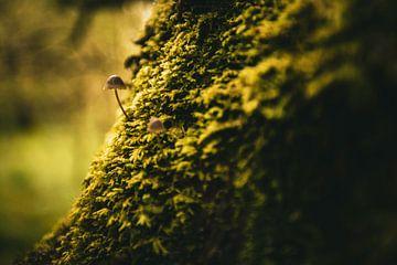 paddenstoelen op mos van Five elements media