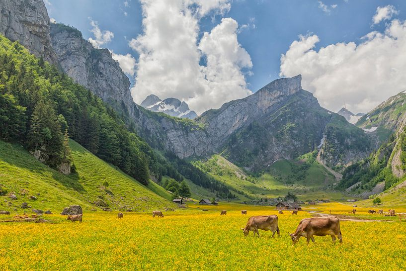 Alpenweide bij Seealpsee van Cor de Bruijn