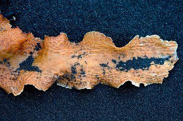 Oranje zeewier op zwart strand van Remke Spijkers