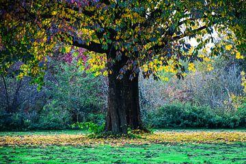 Boom in herfstkleur von Peter Relyveld