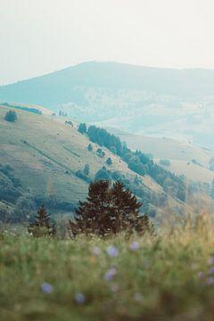 Berglandschap in het Zwarte Woud, Duitsland van Veri Gutte