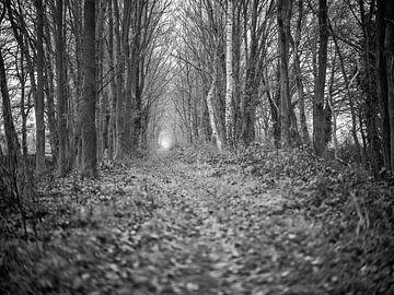 Der Weg von Joris Louwes