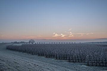 Fruitboomgaard bij zonsopkomst van Moetwil en van Dijk - Fotografie