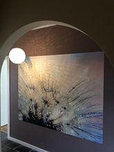 Kundenfoto: Paardenbloem mystiek - Mystical Dandelion von Julia Delgado, auf fototapete