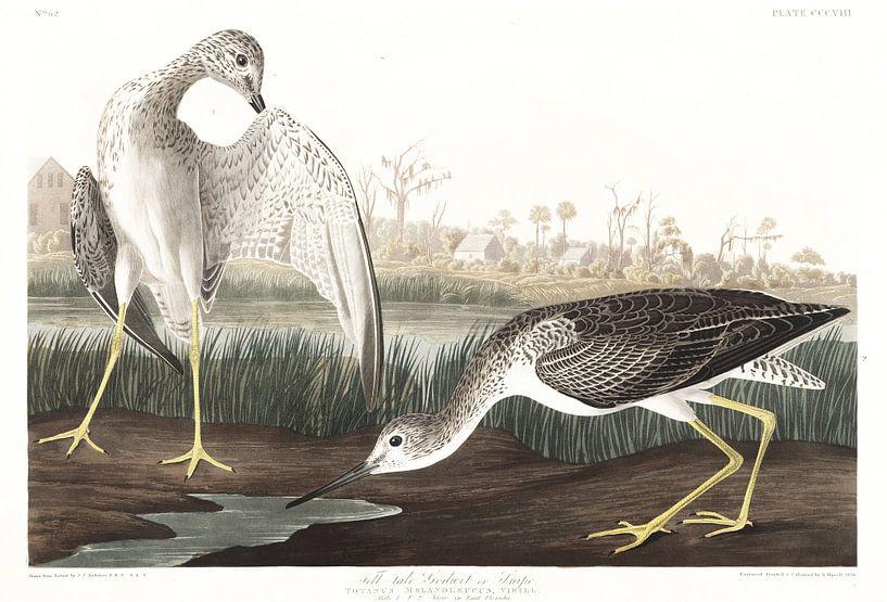 Grote Geelpootruiter van Birds of America