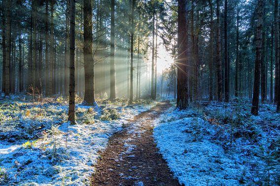 Landschap, zonsondergang in besneeuwd bos van Marcel Kerdijk