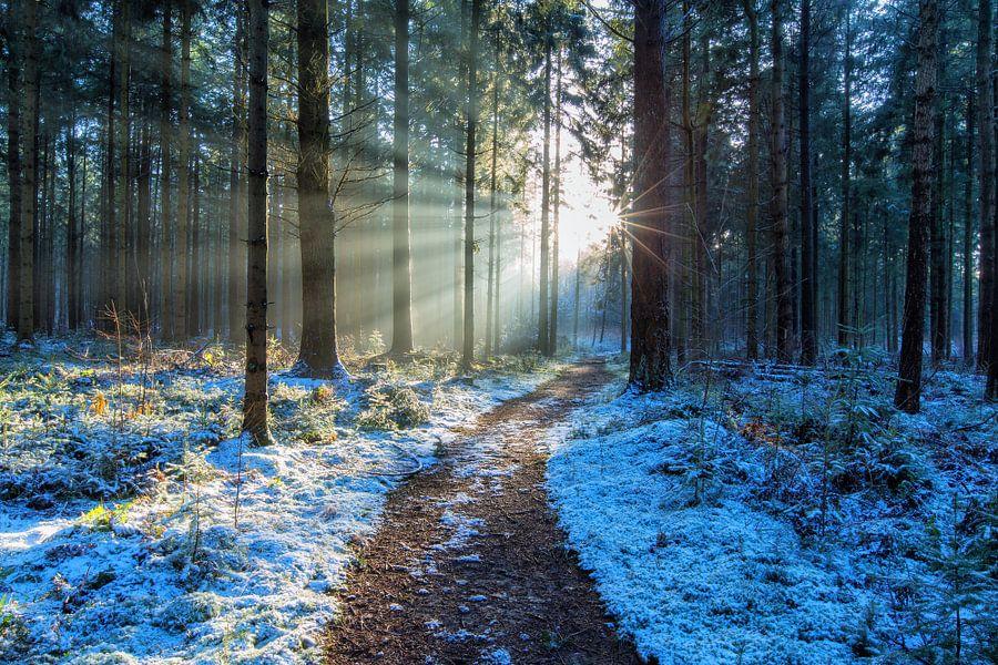 Landschap, zonsondergang in besneeuwd bos