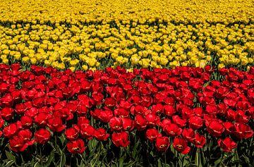 Tulpen Velden von Erika Gallegos