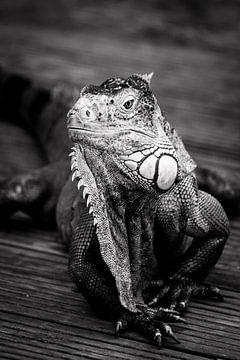 Iguana van Stefania van Lieshout