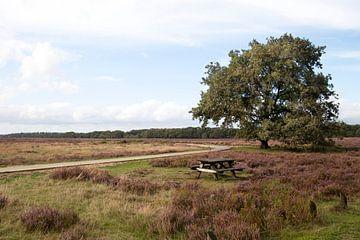 Heide 3