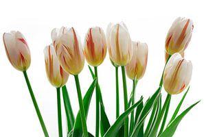 Tulips on Fire van