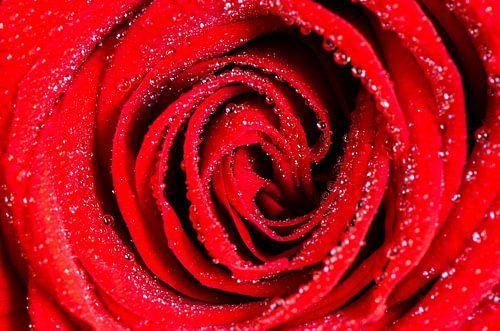 Rode roos met waterdruppels  van Richard Guijt