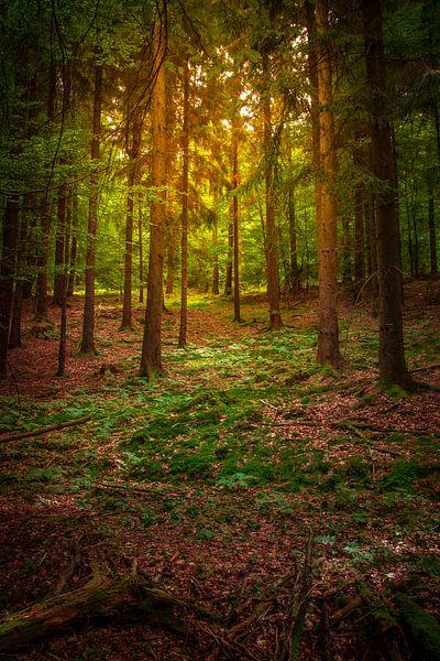 German Forest van Johan Viele