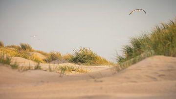 Meeuw boven de duinen van de (Noordzee (Petten aan Zee) van Martijn van Dellen