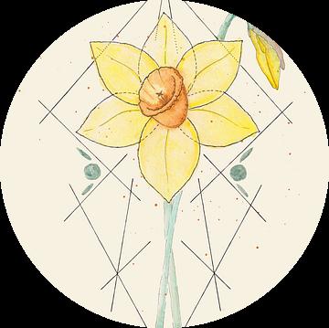 Feminine Focus | De Narcis van Kirsten Jense Illustraties.