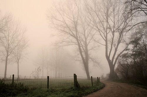 Mist von Paul Arentsen
