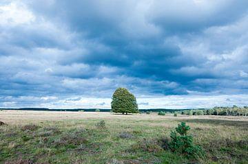 Bäume auf der Hoge Veluwe von Anita van Hengel