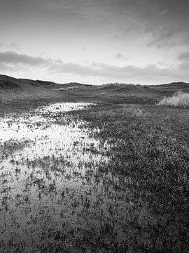 Natte Duinvallei von David Hanlon