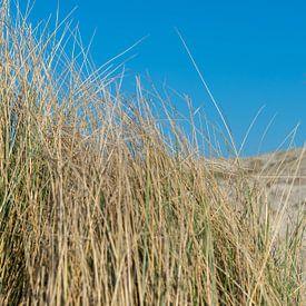 Herbe, dune, arbre et ciel bleu sur Jaco Verheul