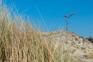 Gras, Düne, Baum und blauer Himmel von Jaco Verheul